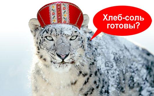 snow-leopard-russia