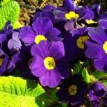 Z10 flowers Feb2013