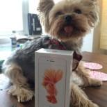 iPhone 6s rose gold delivered